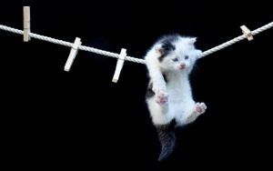 download Funny Cat Hanging Hd Wallpapers
