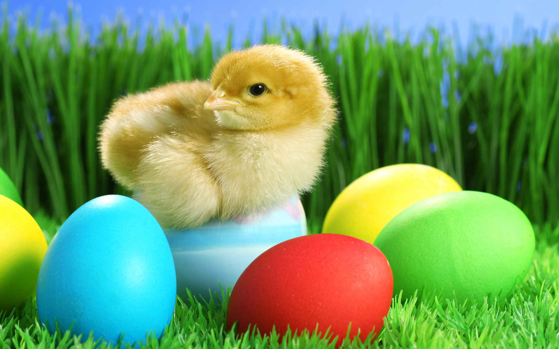 Happy Easter Widescreen Wallpapers 2017