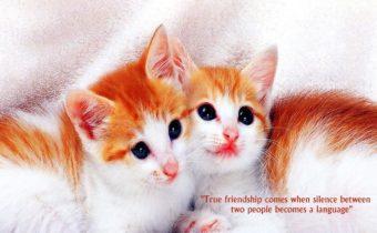 truefriendship_wallpaper