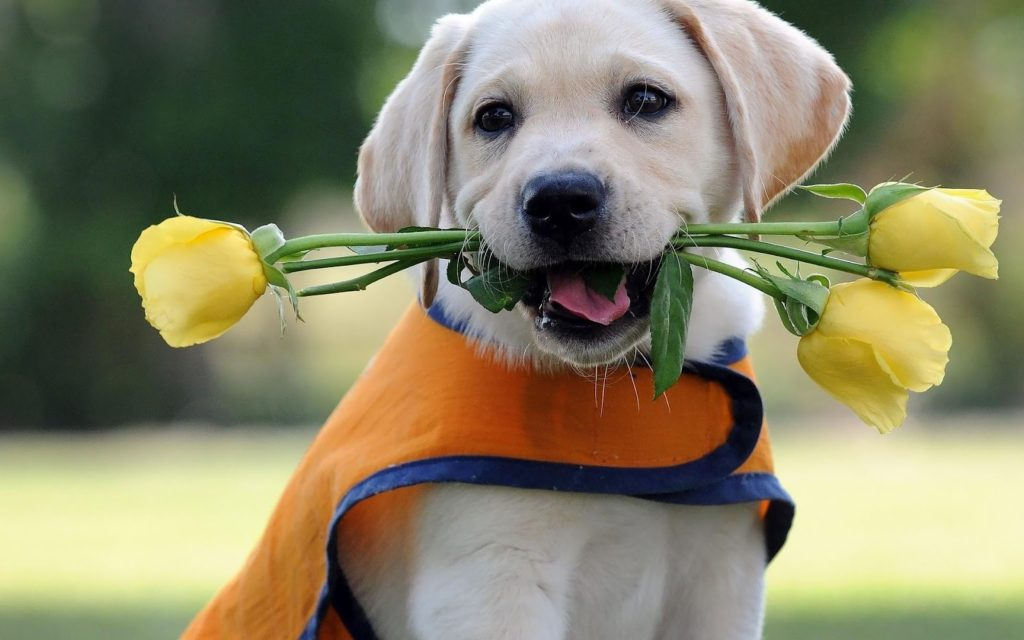 Cute-Dog-with-flowers-HD-Wallpapers