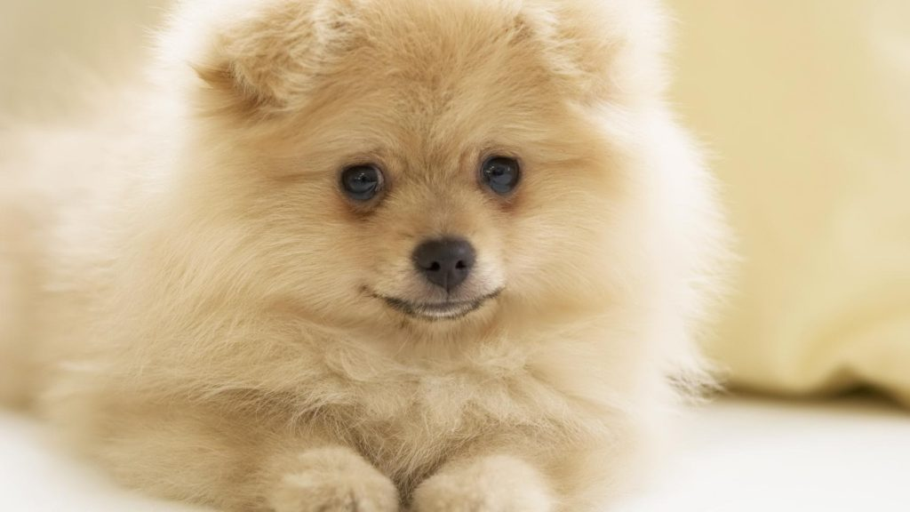 Cute-Puppy-Pics-images-wallpapers