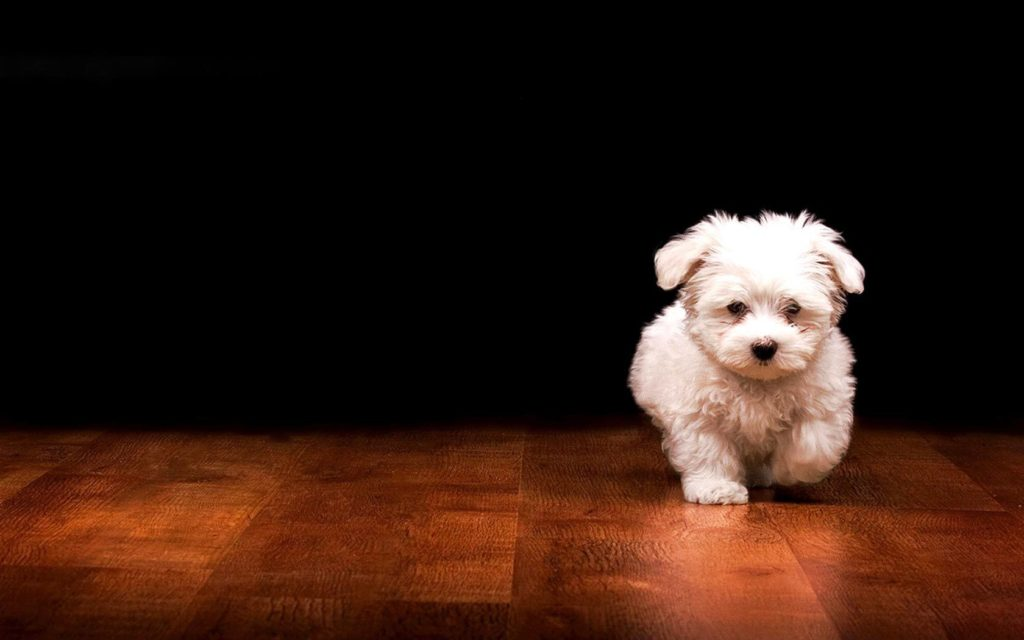Cute-Puppy-Wallpapers