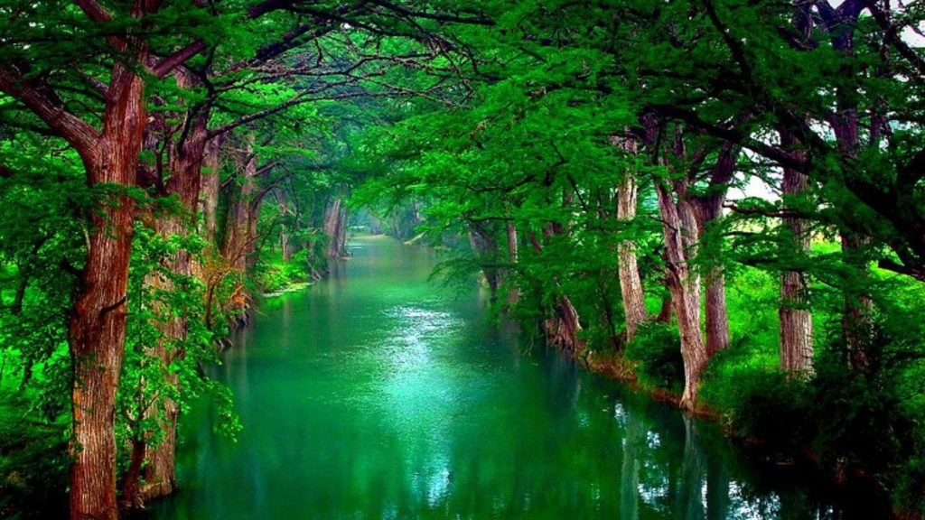 green-water-tree-hd-wallpaper-2017