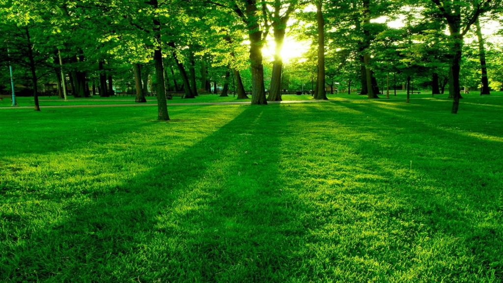 Lush-green-meadow-wallpaper-Images-2017