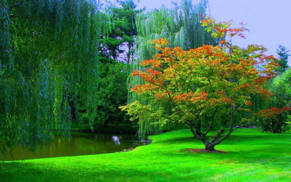 Latest-Nature-Hd-Wallpapers-Green-Grass