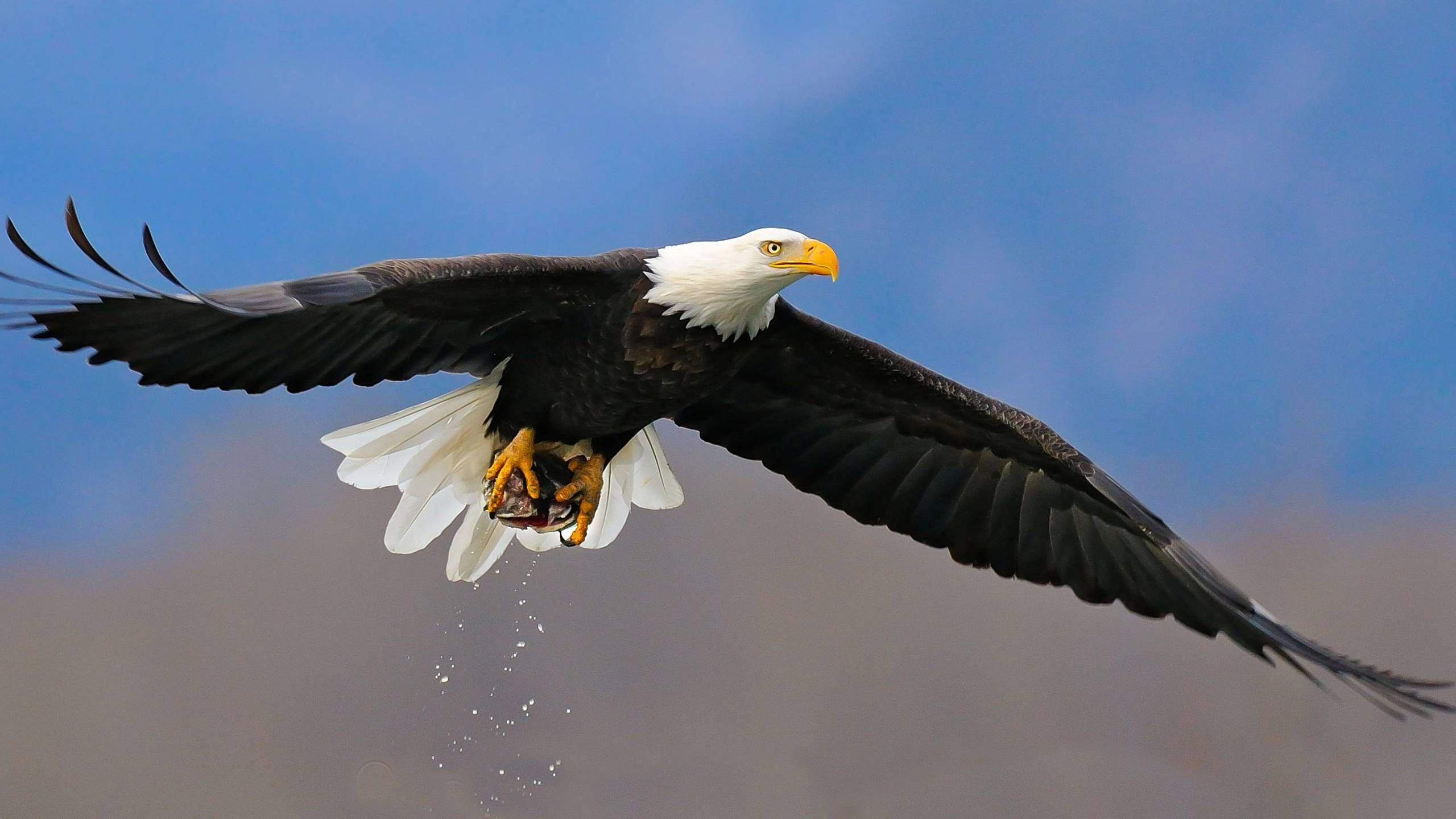 Eagle-Best-Hunting-Hd-Wallpaper-Latest